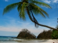 Palm Tree on Jaco Beach